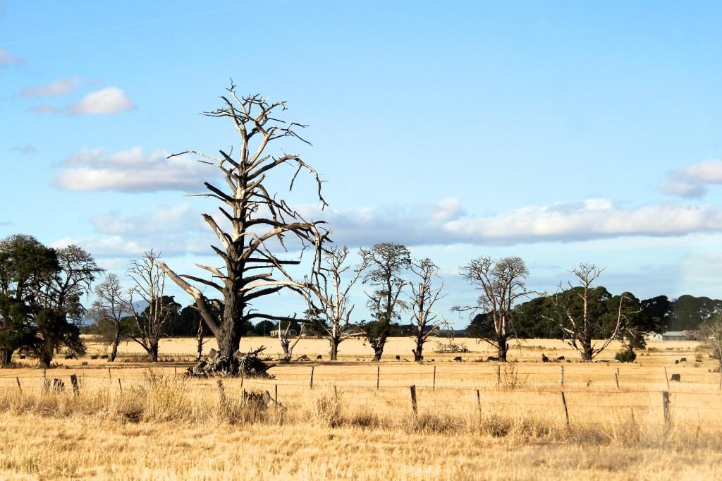 Le bush et ses arbres brûlés