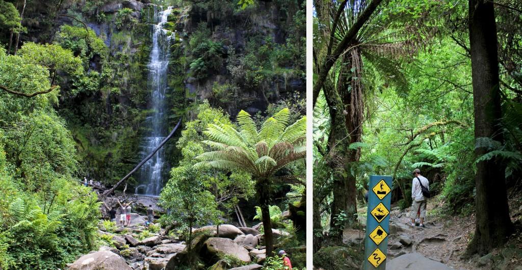 Dans la forêt près des Erskine Falls