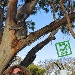Partage d'un thé à l'eucalyptus avec une touriste