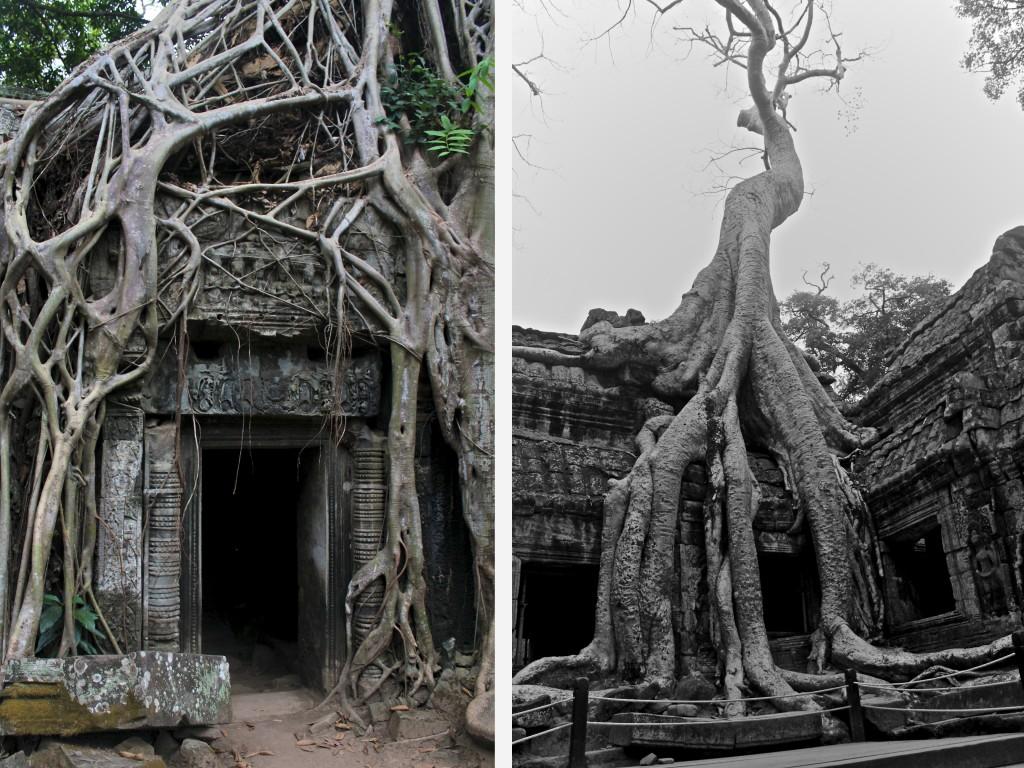 Temple de Ta Prohm rénové en conservant volontairement un certain envahissement de la jungle