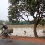 Habitante parcourant en vélo les routes de campagne des alentours d'Angkor