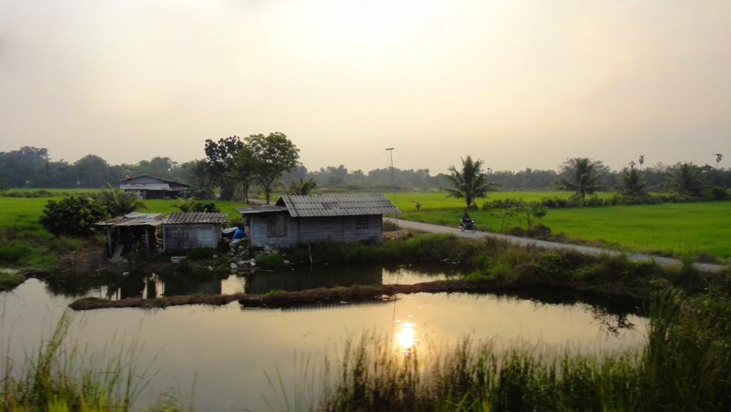 Paysage de rizières au lever du jour entre la Thaïlande et le Cambodge