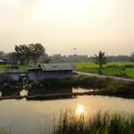 Paysage de rizière entre la Thaïlande et le Cambodge