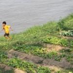 Potager au bord du Tonlé Sap en plein coeur de Phnom Penh