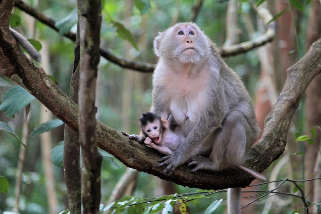 Bébé et maman singes