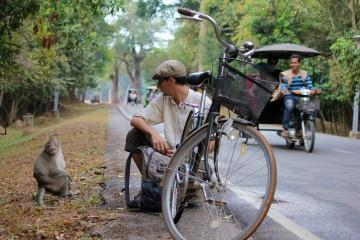 Rencontre avec les singes d'Angkor