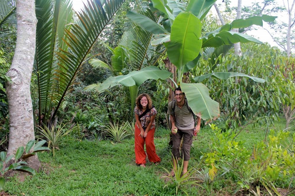 Sous un bananier dans un jardin au bord du Mékong