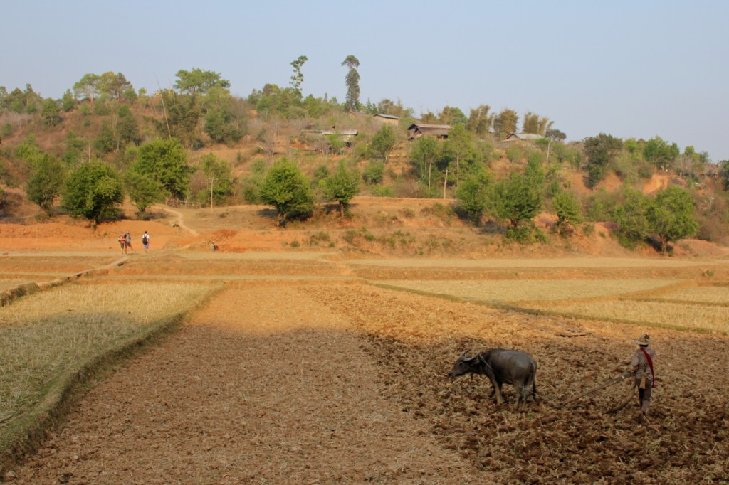 Labourage d'un champ près de Kalaw