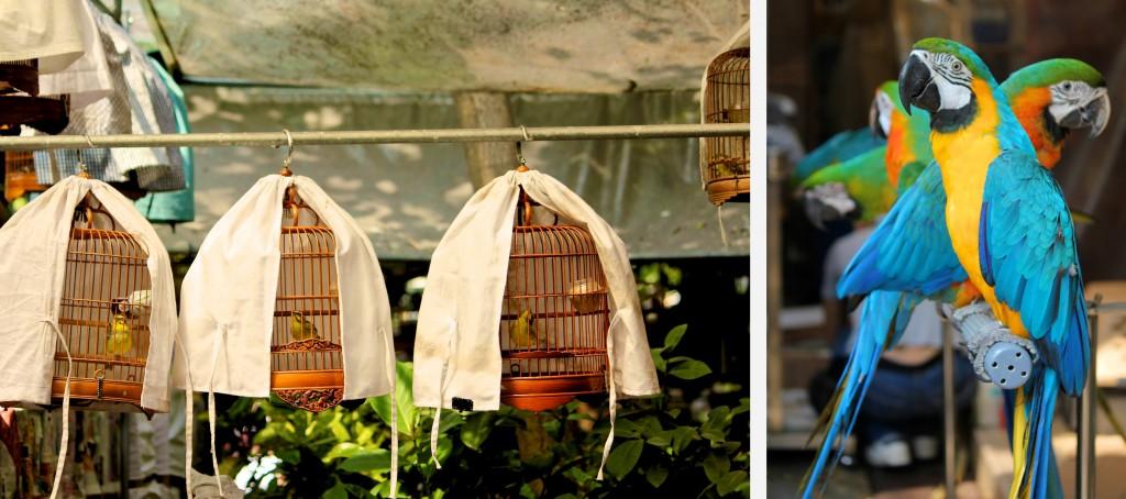 Marché aux oiseaux de Yuen Po Street