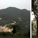 Quand la nature tropicale et le béton se rencontre à Hong Kong