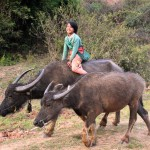 Jeune cow-boy birman