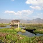 Jardin flottant du lac Inlé