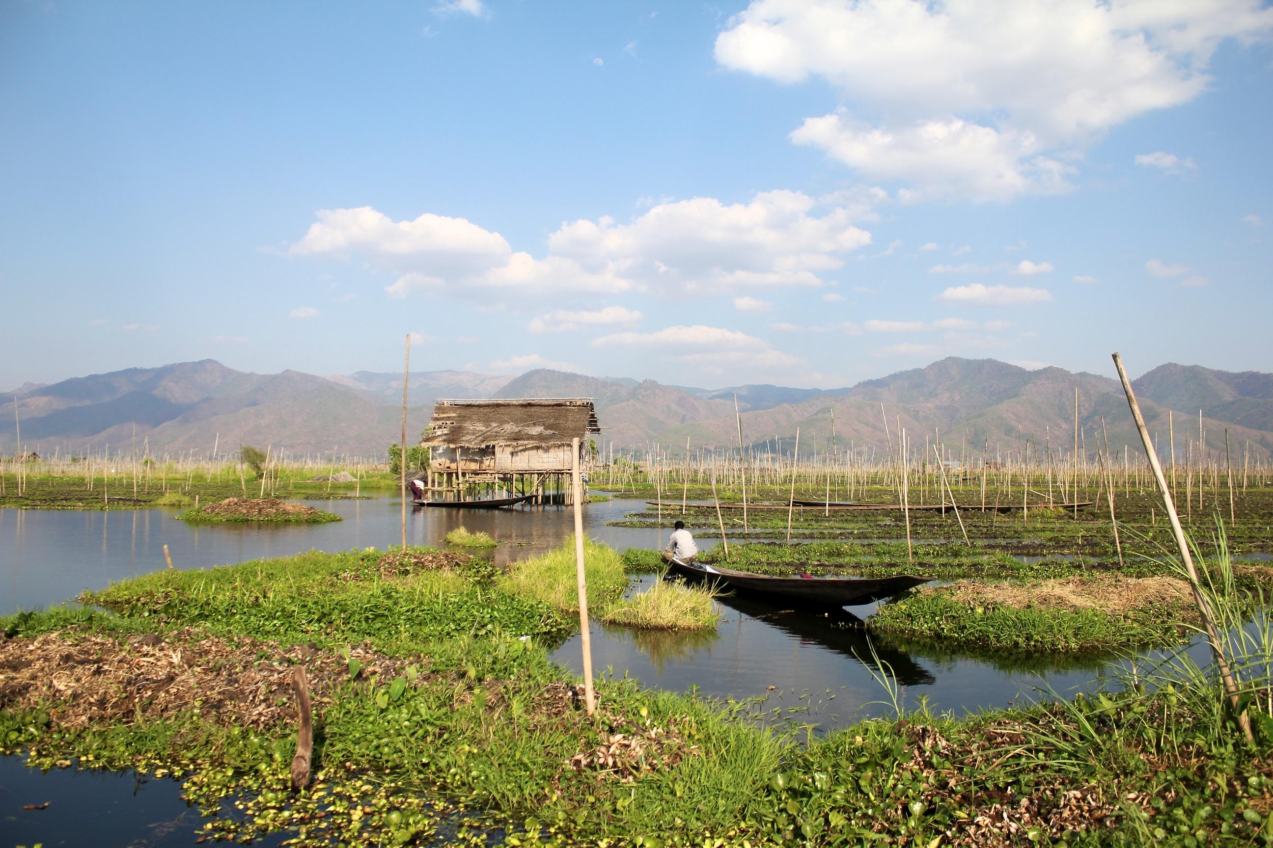 Jardin flottant du lac inl for Jardin flottant