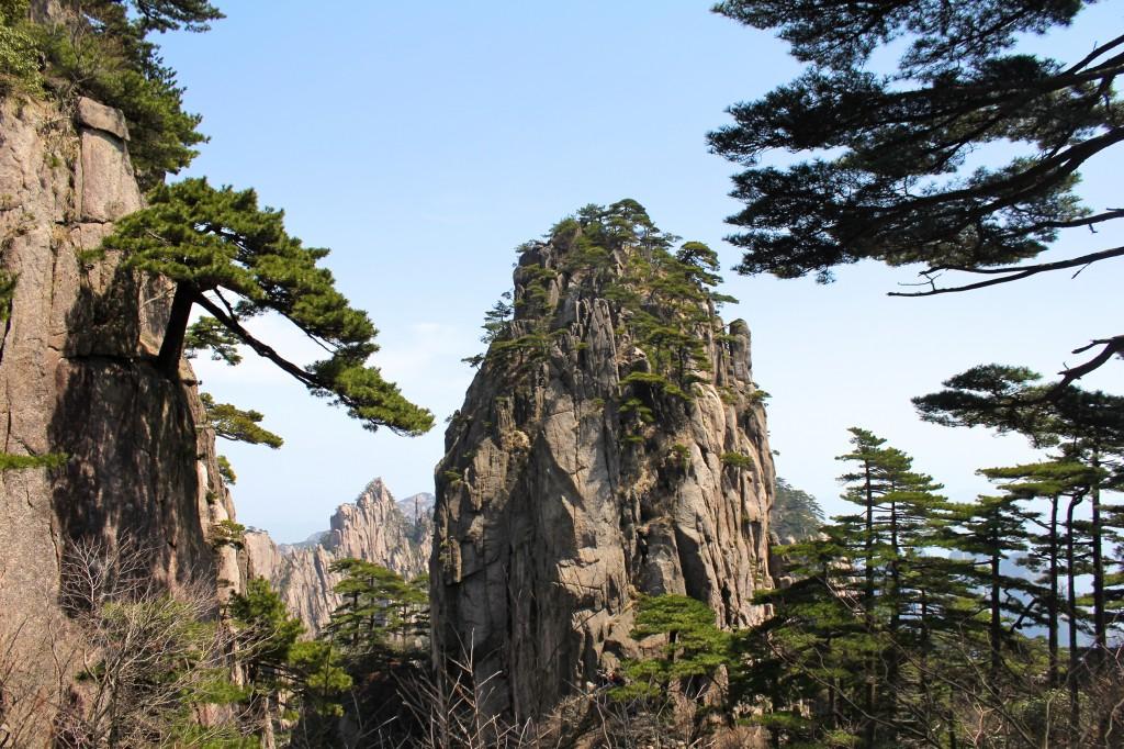 Pics rocheux et pins endémiques des Yellow Mountains