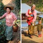 A droite, cueillette du thé par une paysanne shan et à gauche petit garçon pa-o à la coupe très stylée et sa maman