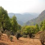 Vue sur les montagnes et les plantations de thé autour de Kyaukme