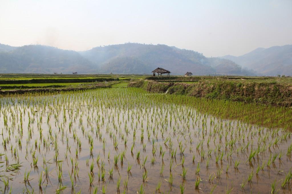 The green village avec ses rizières entourées de montagnes à quelques kilomètres de Kyaukme où Naing Naing nous a emmené sur sa mobylette