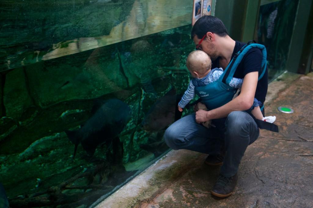 Rencontre avec les piranhas !