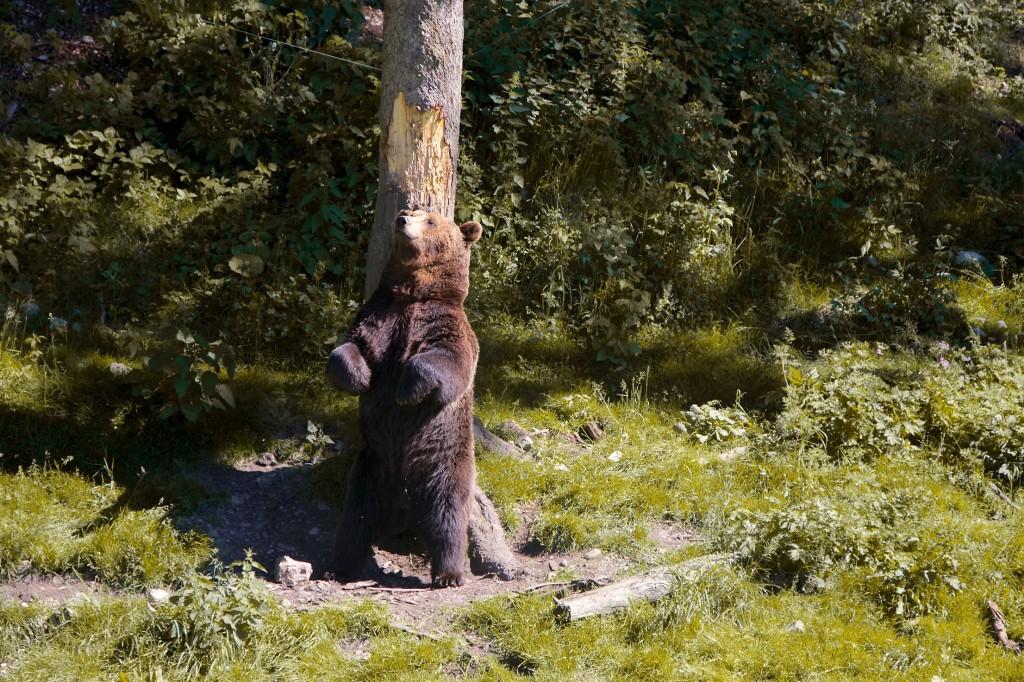 Si on te dérange l'ours, dis-le nous, on reviendra un autre jour au Juraparc !