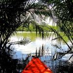 Perdus dans la cathédrale verte de Kampot