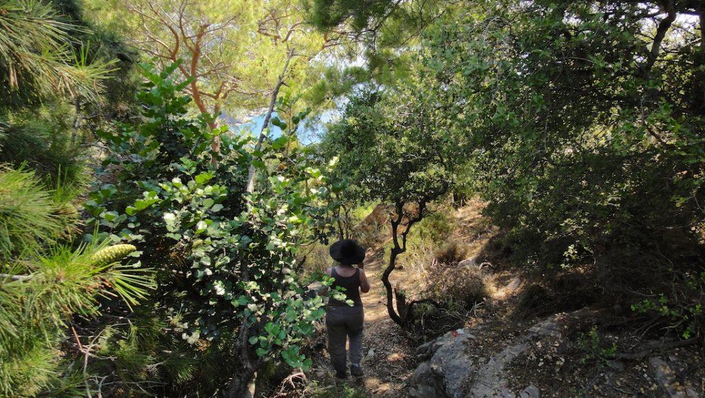 Sous la forêt de la voie lycienne