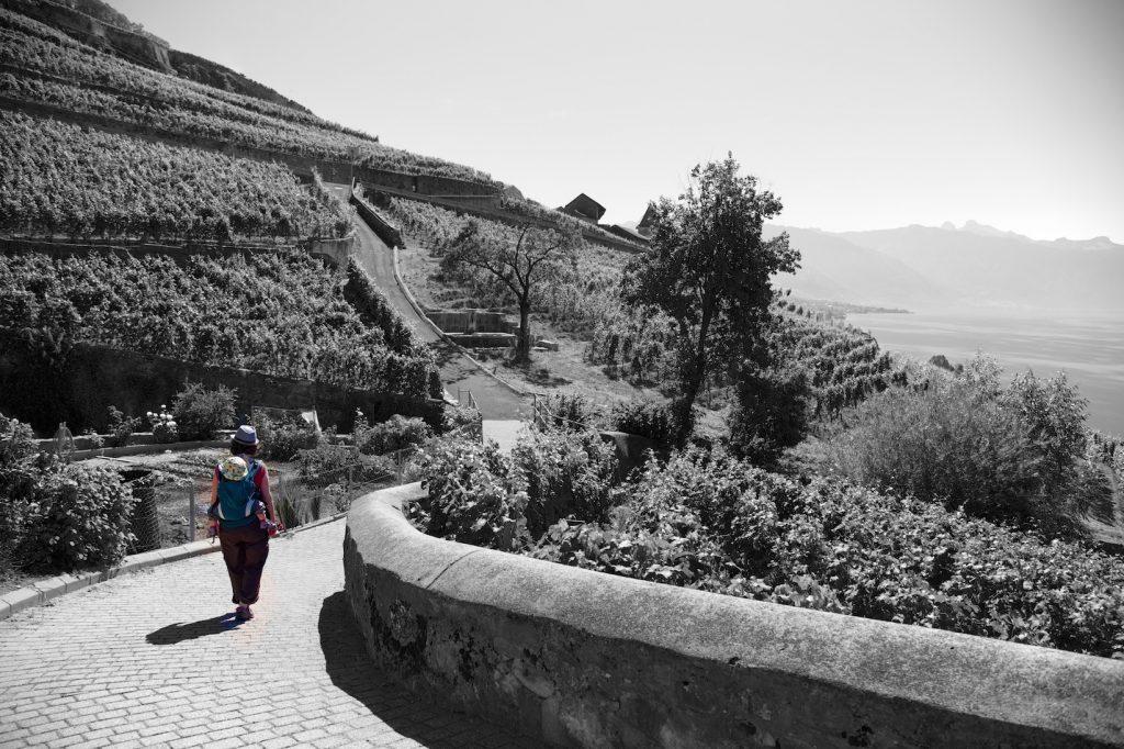 Noir et blanc entre lacs et montagnes dans la région du Léman