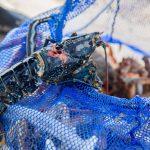 Pêche d'un pêcheur au harpon sur la plage