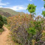 Végétation luxuriante au printemps dans la réserve du Zingaro en Sicile