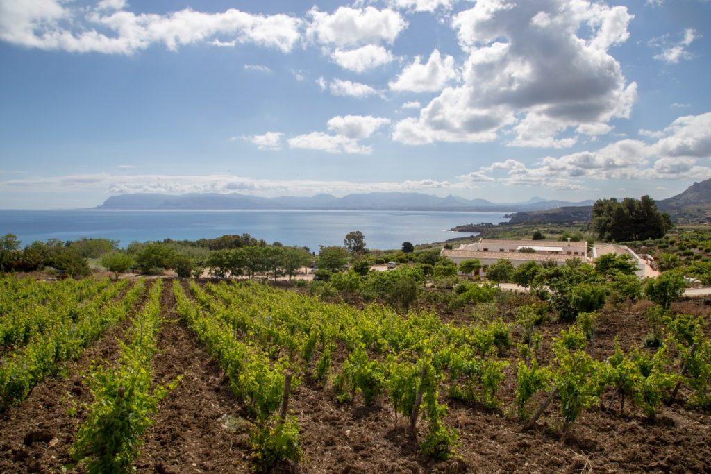 Paysages viticoles du nord-ouest de la Sicile, un petit air de Lavaux en Suisse