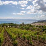 Paysages viticoles du nord-ouest de la Sicile