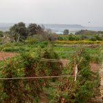 L'île de Gozo : une destination encore secrète, sauvage et rurale