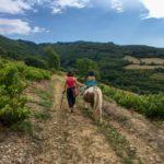 Promenade à poney dans le Beaujolais vert